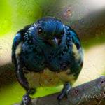 blauer Vogel_deepdream