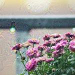 rosa Blumen_deepdream